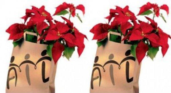 Prezzo Stella Di Natale Ail.Messina Una Stella Di Natale Per Sconfiggere La Leucemia