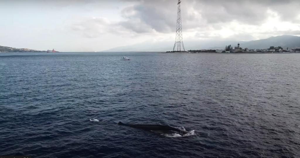 """Passaggio della balena """"Codamozza"""" a Capo Peloro (MESSINA)"""