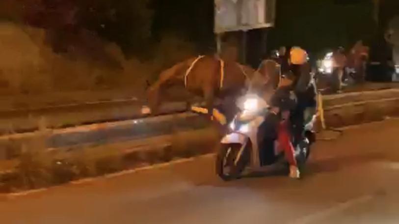 Folle corsa dei cavalli a Messina parte 3